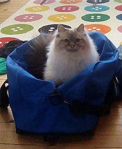 Lulu in der Tasche